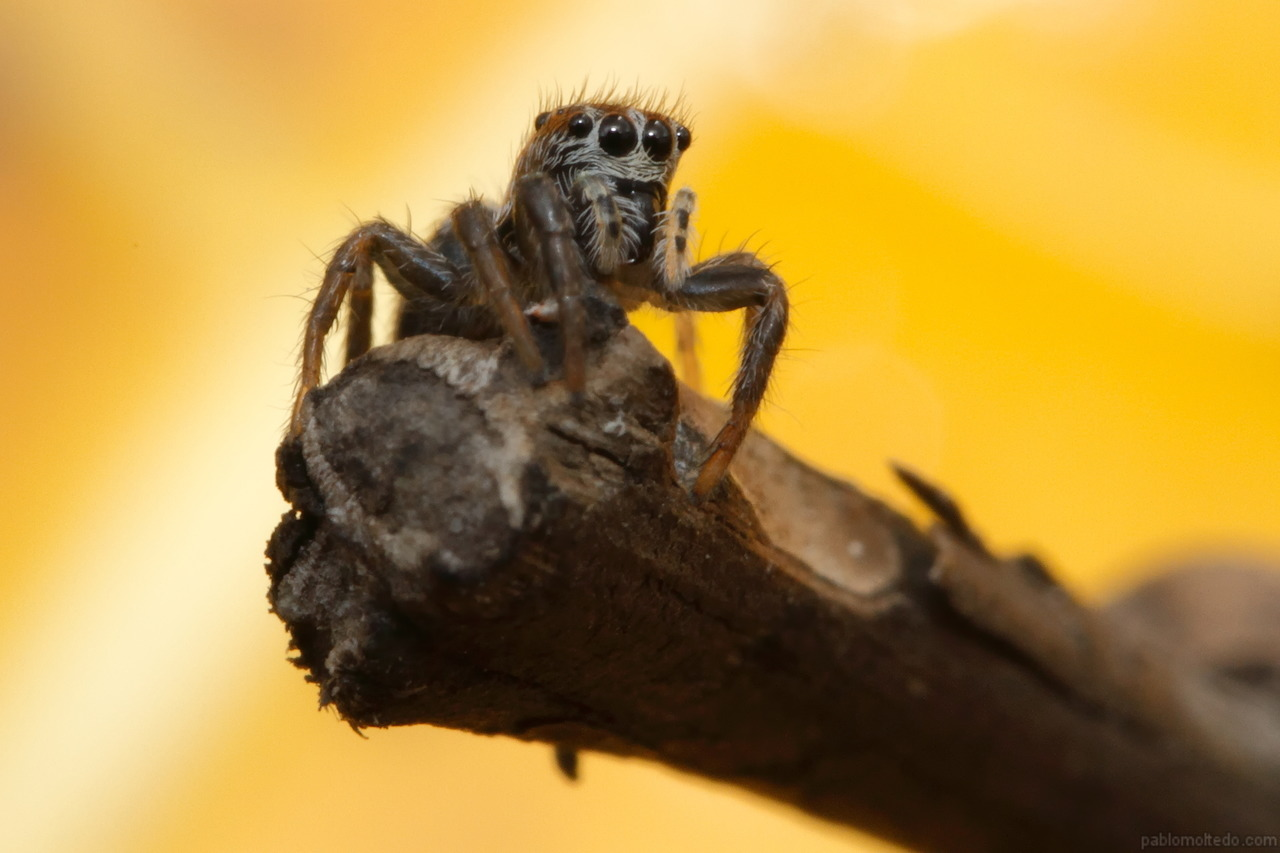 Salticidae in autumn [1280x853][OS][OC]