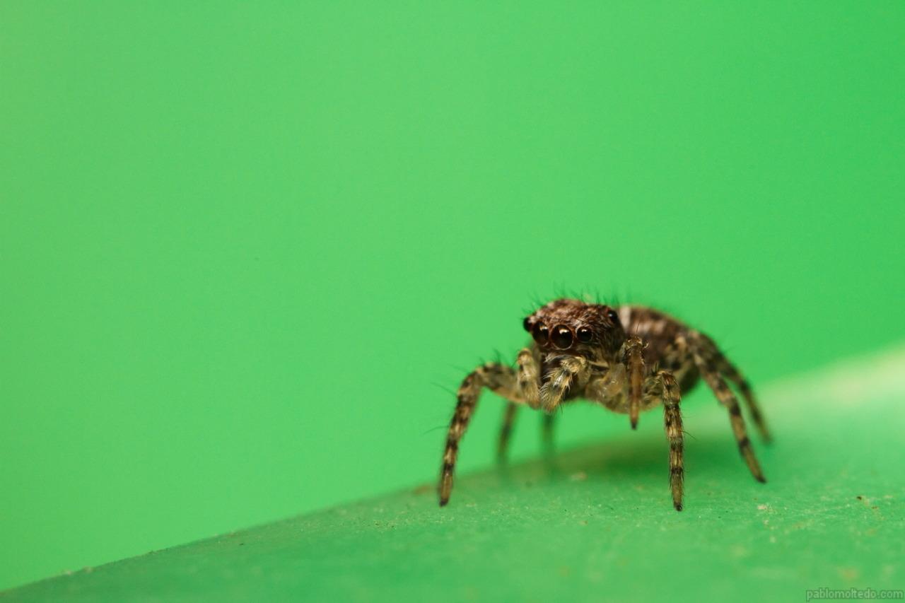 Salticidae spider on dog food bowl [1280x853][OS][OC]